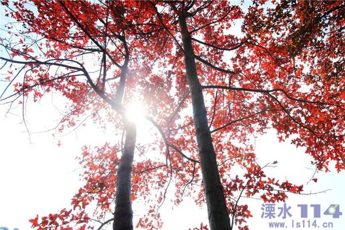 6406_看图王.web.jpg