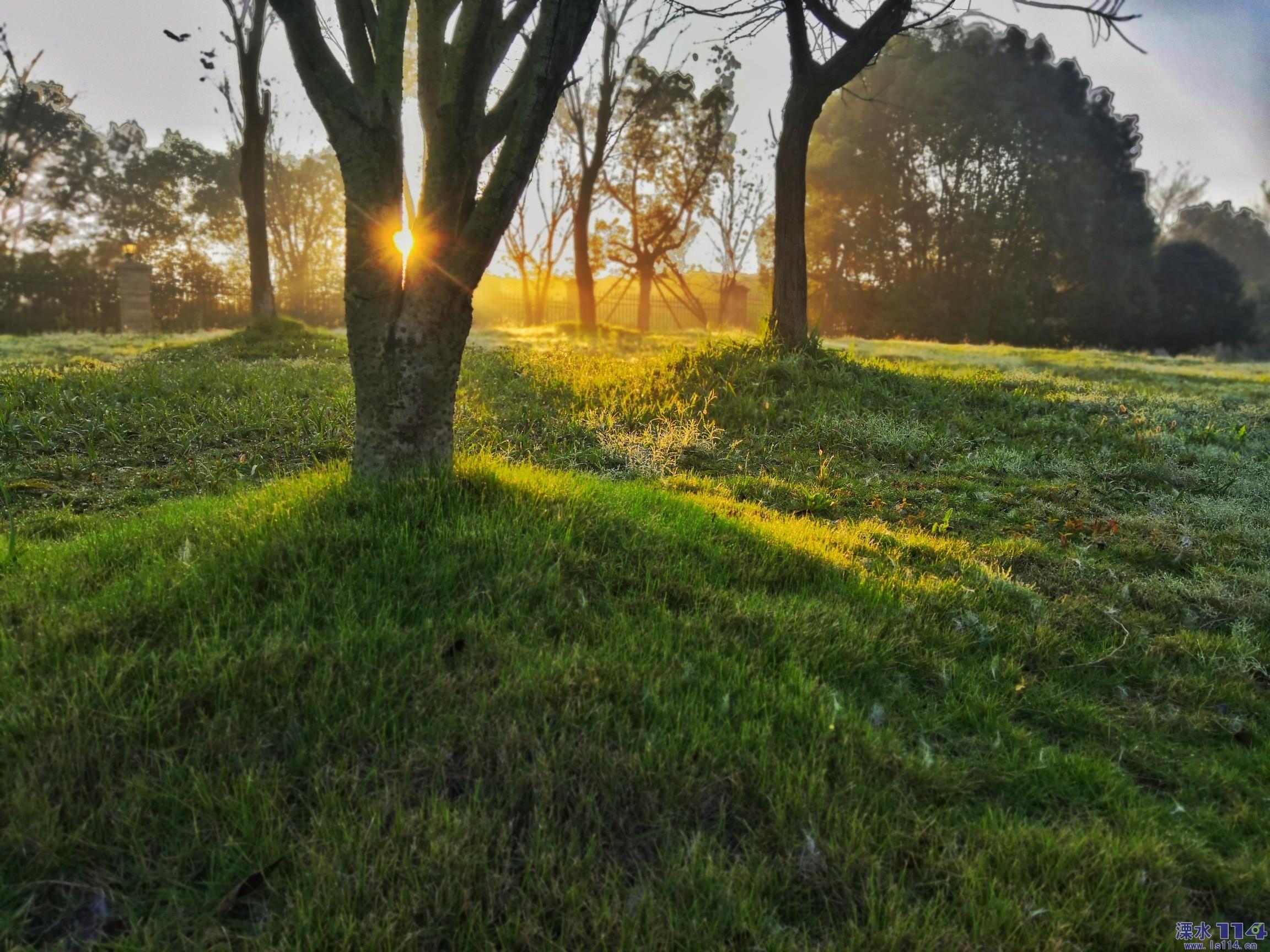 《当清晨第一缕阳光洒向大地时》