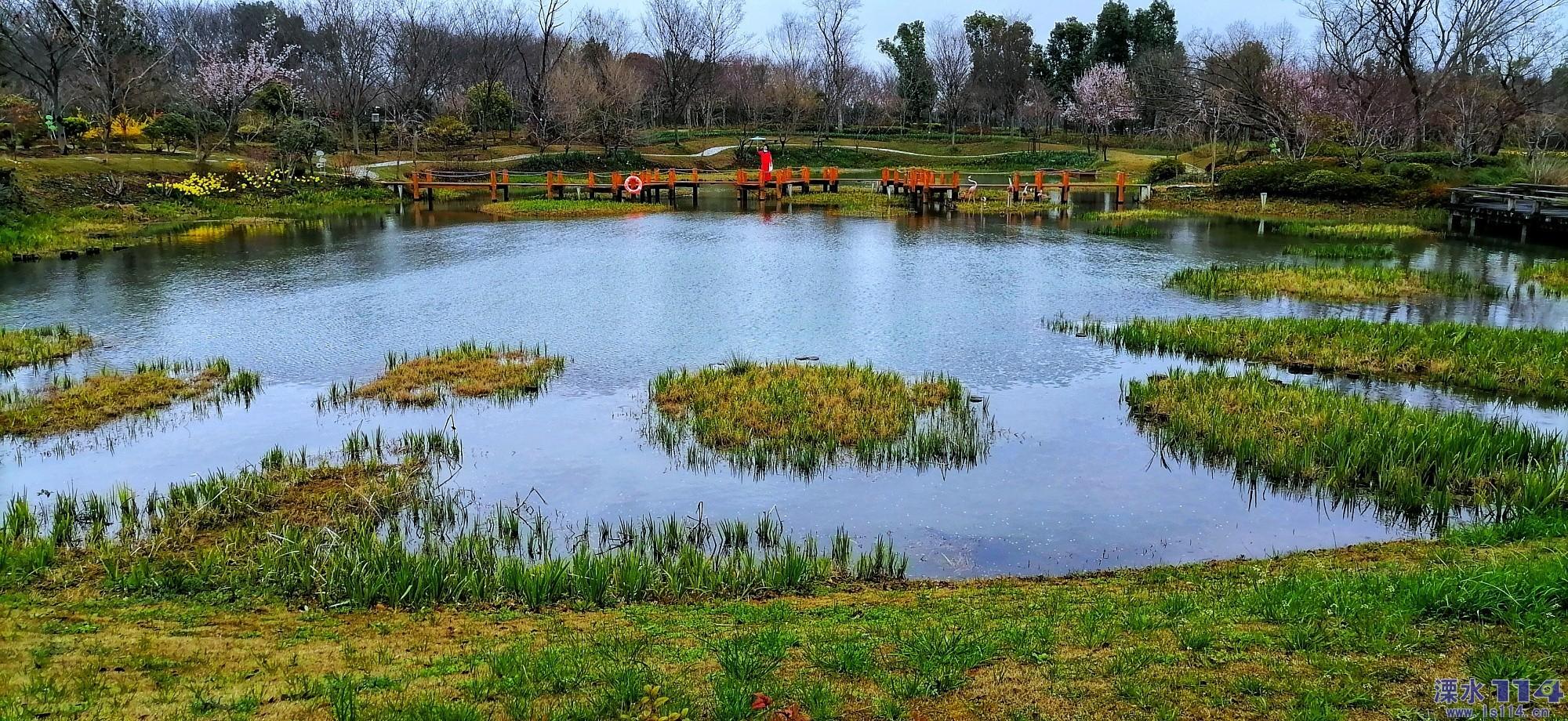 南京溧水和风首届百花节开幕。