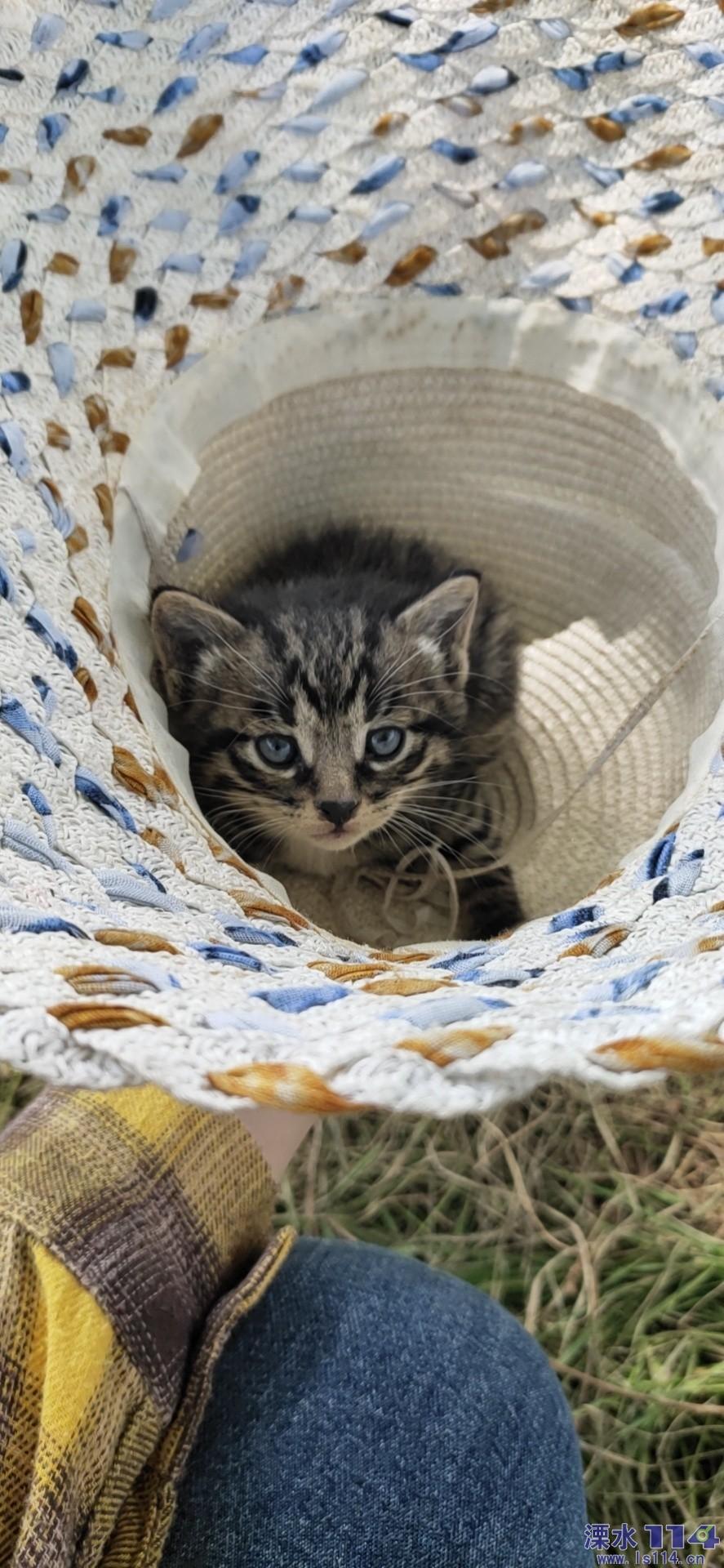 有没有人要养小猫