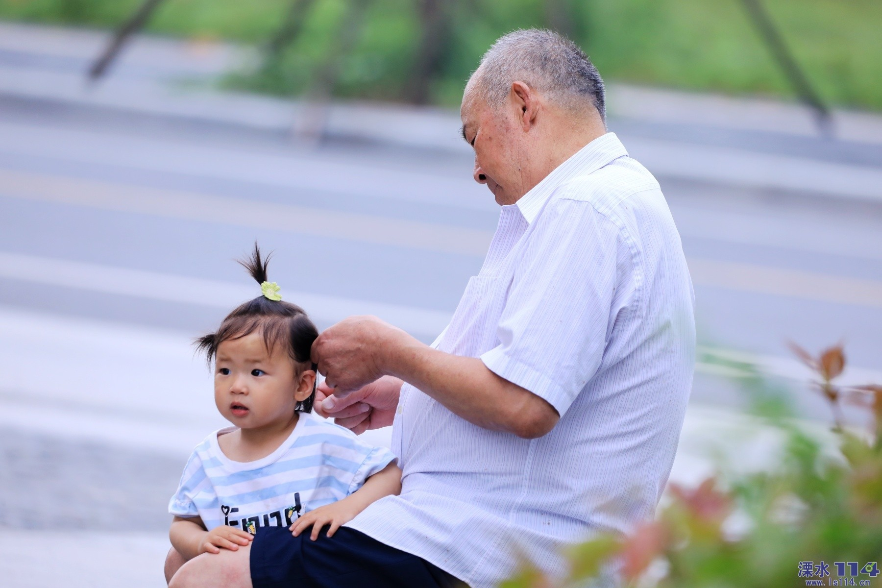 爷爷为我梳小辫